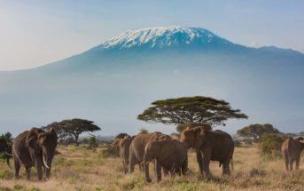 Safari au Kenya : tout ce que vous devez savoir avant de partir