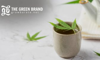 GB The Green Brand growbarato