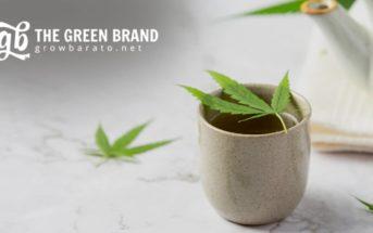 Growbarato s'appelle désormais GB The Green Brand, un pari gagnant sur le futur