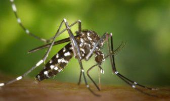 Comment se protéger efficacement de la piqûre des moustiques?