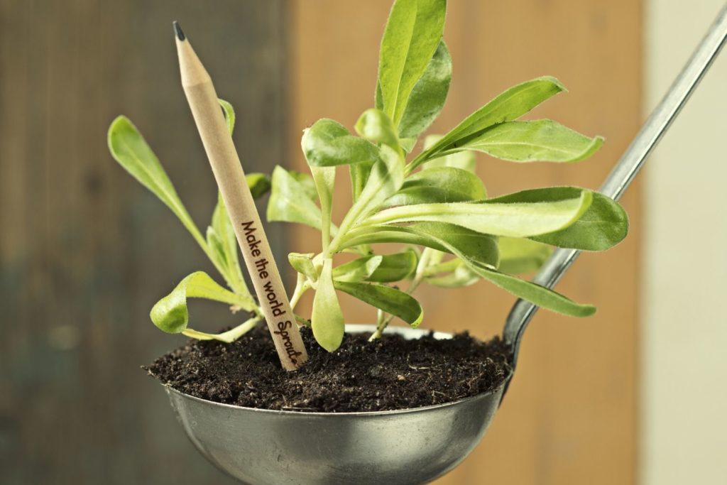 Le crayon qui se métamorphose en plante
