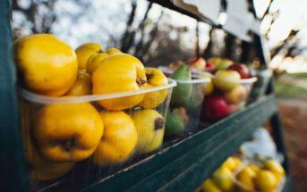Épicerie vrac : comment lancer sa boutique alimentaire bio ?