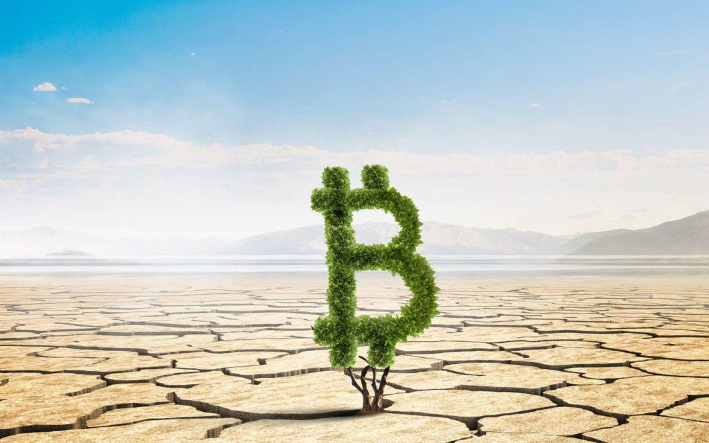 Un arbre de Bitcoin en plein désert