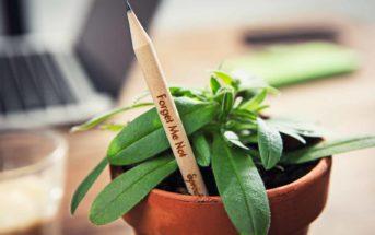 Sprout World : l'eyeliner intelligent qui se transforme en fleurs