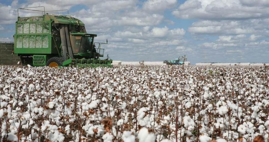Le coton, matière non écolo