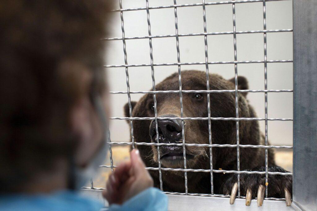 Un ours dans une cage