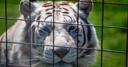 Un titre dans une cage