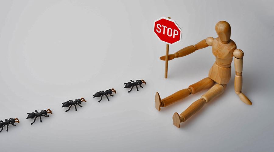Solution naturelle contre les fourmis