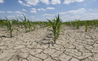 Agriculture : des solutions existent pour l'adapter au réchauffement climatique