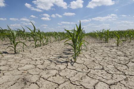 des plantes sur un sol aride
