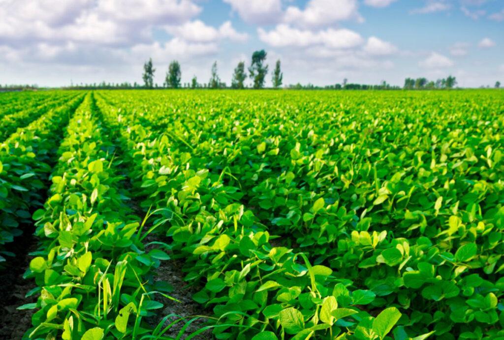 Utilisation d'inoculants en agriculture