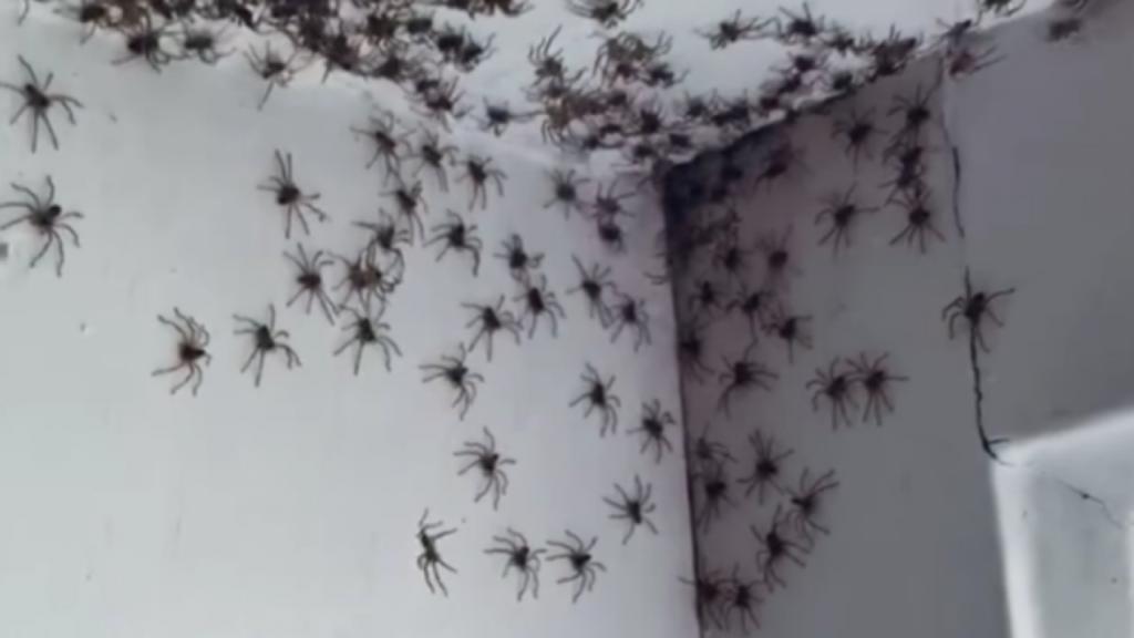 peur-araignée