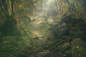 Vous avez peur de la forêt ? Vous souffrez de l'hylophobie